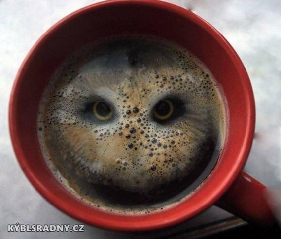 Když sova kouká z kafe