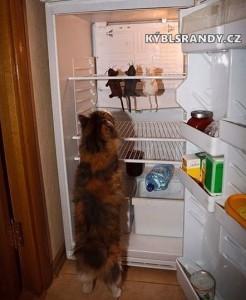 Kočičí chladnička