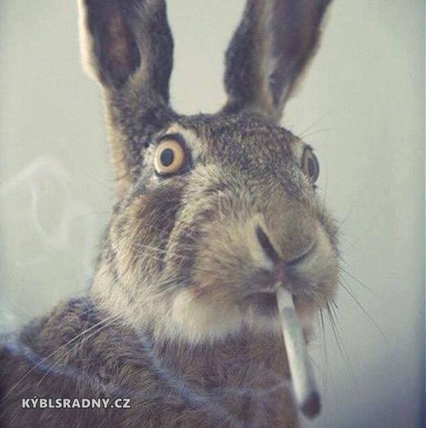 Kouřící zajíc