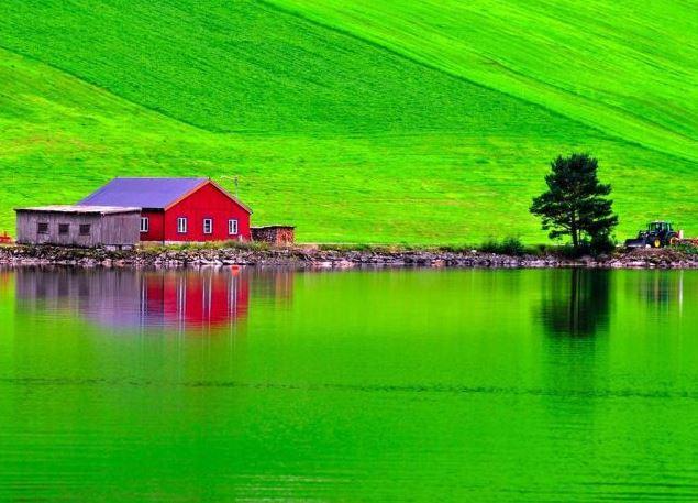 Nádherná zeleň foto