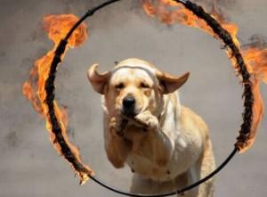 Odvážný pes