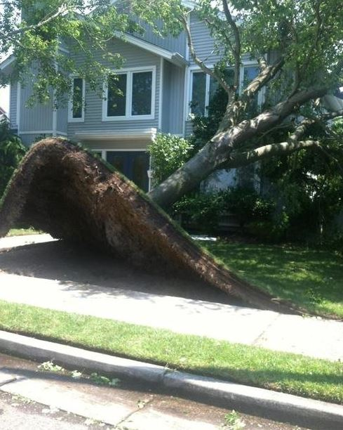 Ten strom neměl skoro žádné kořeny