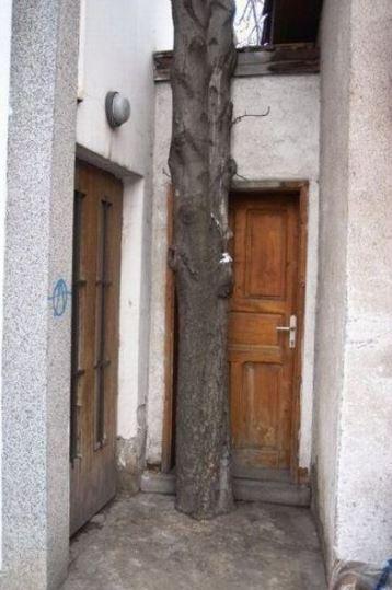 Ten strom tady velmi překáží!
