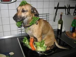 Vaříme psa