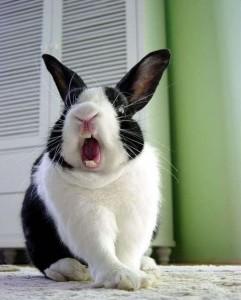 Uřvaný králík