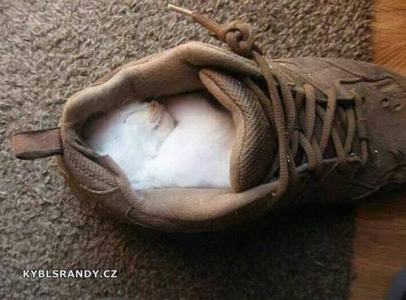 Malé kotě, spalo v botě