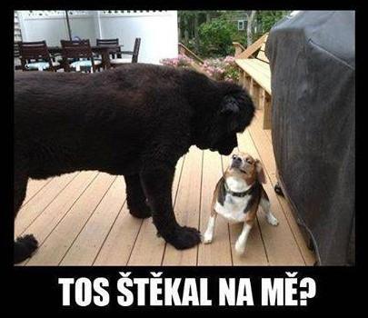 Malej drzej pes