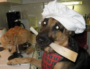 A jdeme vařit kočku