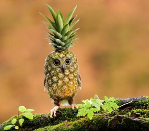 Ananasová sova