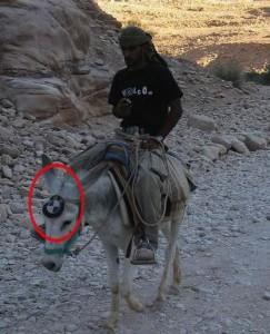 BMW osel