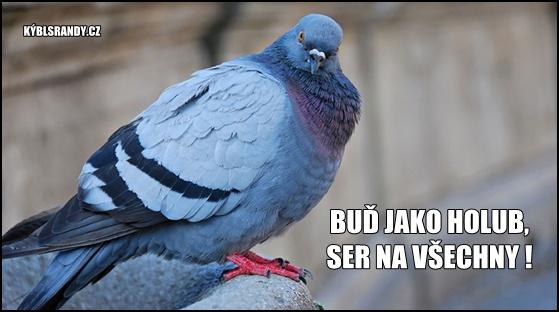 Buď jako holub