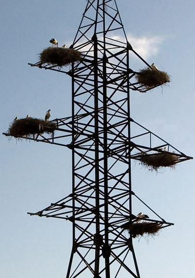 Čapí hnízda