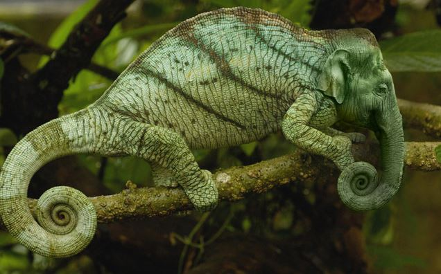 Chameleno-slon