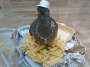 Cool holub