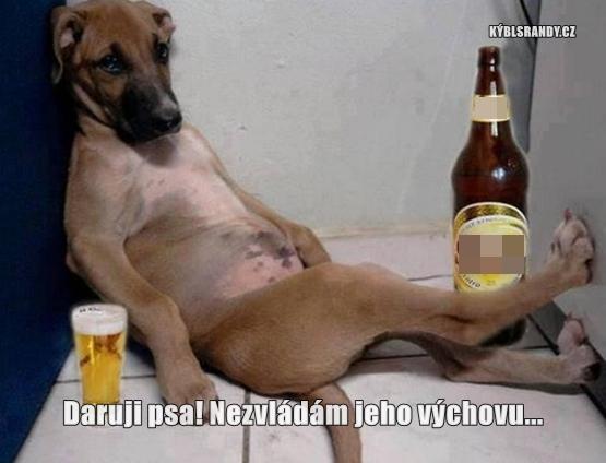Daruji psa