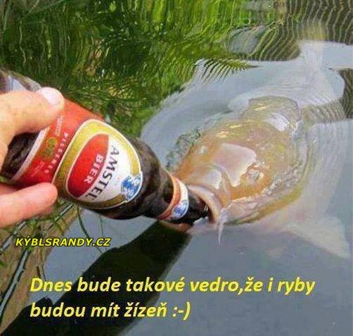 Dnes bude takové vedro, že i ryby budou mít žízeň