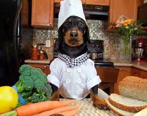 Dneska vařím já - pes
