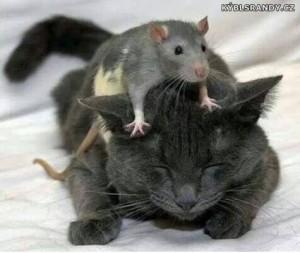 Drzá myš