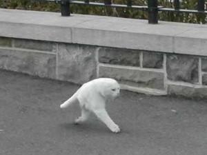 Dvounohá kočka