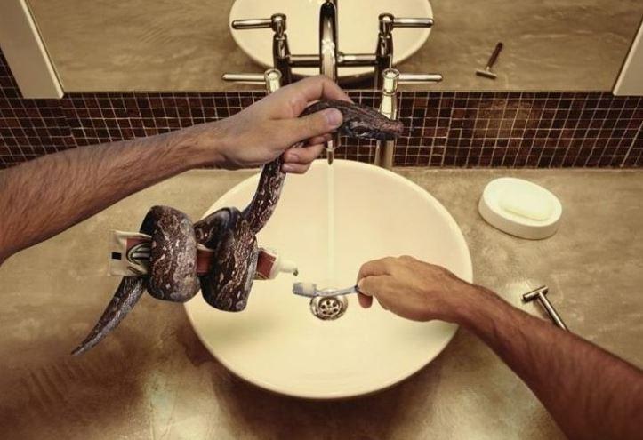 Had vymačká zubní pastu