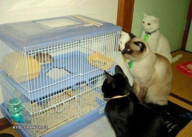 Hladové kočky