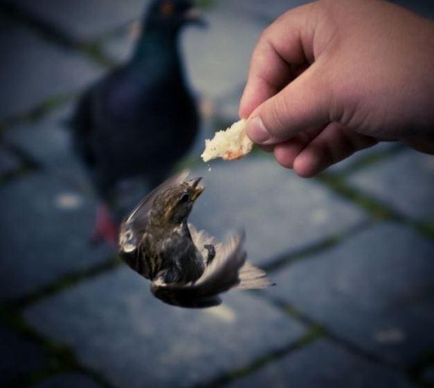 hladový pták