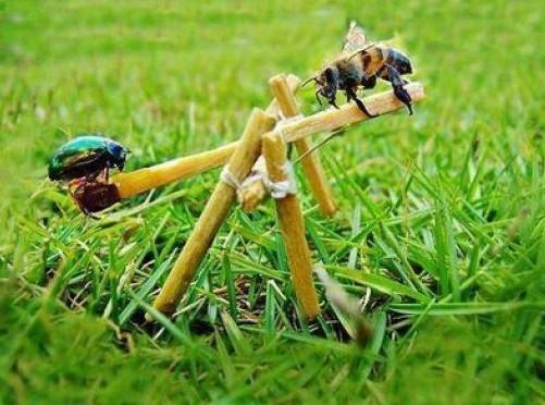 Hmyz na houpačce