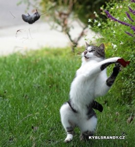 Já ti dám myško!