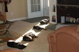 Jdou za sluncem