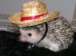 Ježek v klobouku