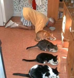 Jím jedině s kočkama!