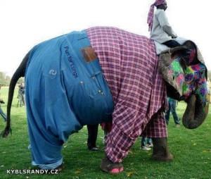 Jízda na oblečeném slonovi