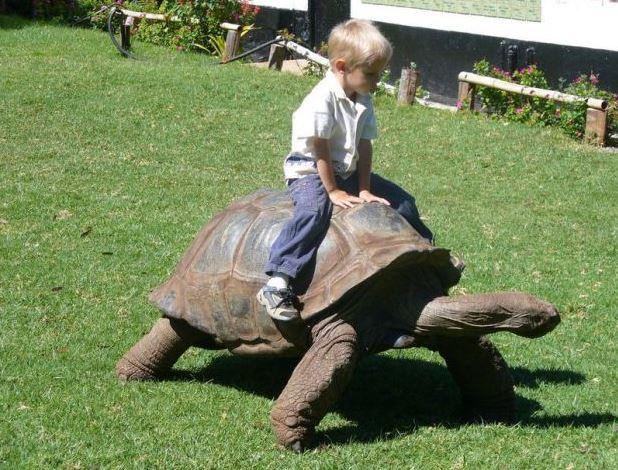 Jízda na želvě