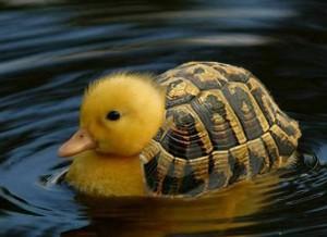 Kačena nebo želva?