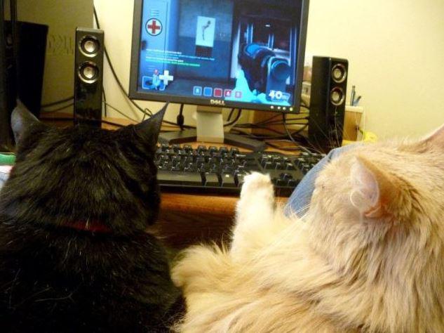 Když kočky paří hry