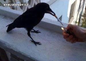 Když pták kouří cigaretu