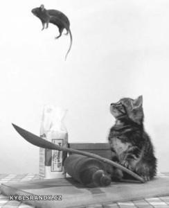Když si kočka hraje s myší