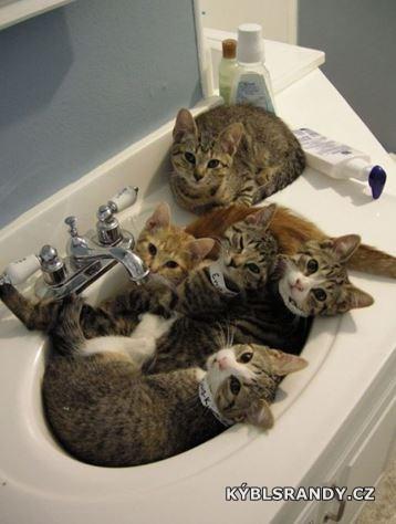 Kočičárna v umyvadle