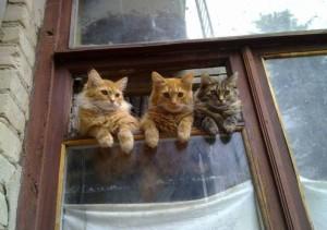 Kočičí drbny