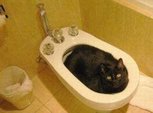 Kočičí koupel