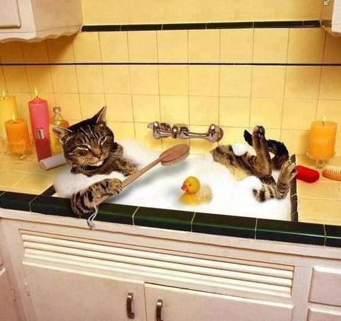 Kočičí kuchyňská lázeň