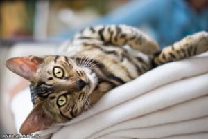Pěkný kočičí kukuč