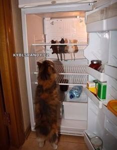 Kočičí lednice