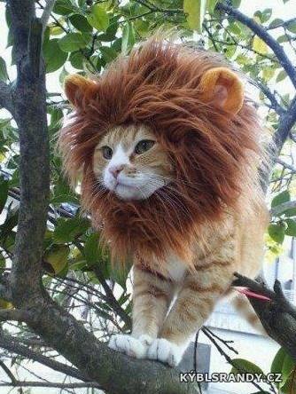 Kočičí lvíče