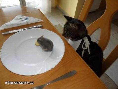 Kočičí oběd