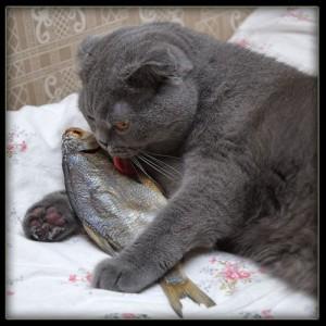 Kočičí pochoutka