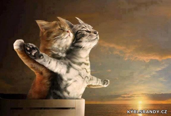Kočičí Titanic