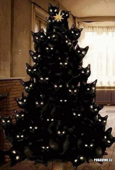 Kočičí vánoční stromek