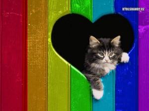 Kočka v srdci