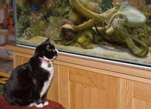 Má ta kočka snad chuť na chobotnici?